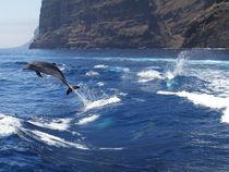 Freiheit von Gesellschaft zur Rettung der Delphine e.V.